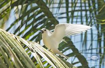 Nikumaroro Screen Saver: Birds of Nikumaroro